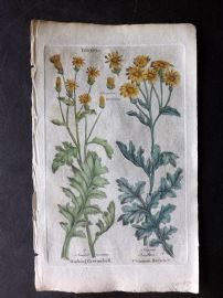 Hill & Culpeper 1792 HCol Botanical Print. Stinking Groundsell, Common Ragwort